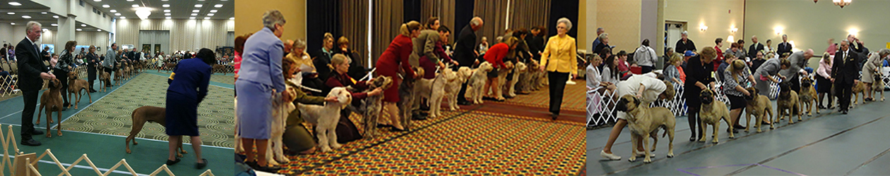 All AKC Breeds